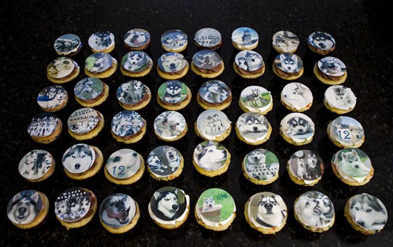 Cupcakes Huskies (1)